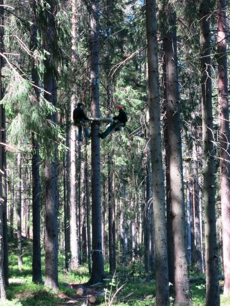 монтаж платформ на деревьях